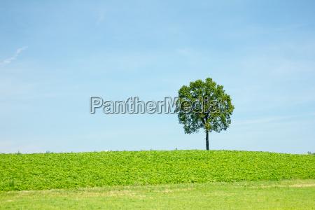 drzewo pole pusty niewazny felder wykazaly