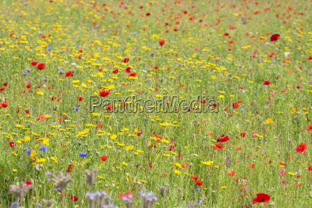 kwiat kwiatek zawod roslina latorosl pole