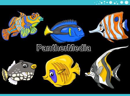 zwierzeta zwierzatka ryba ilustracja tropikalnych tropikalny