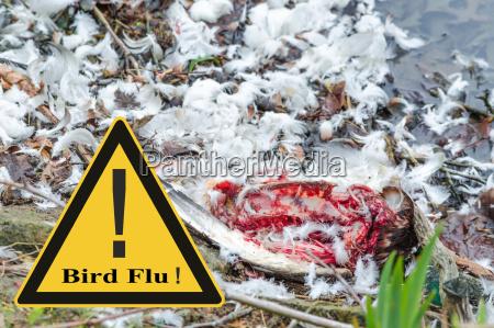 symboliczne ogolne zapobieganie wirusowi grypy ptakow