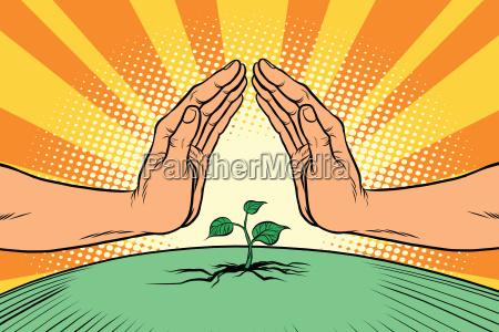 ludzkie dlonie chroniace zielona kapuste srodowisko