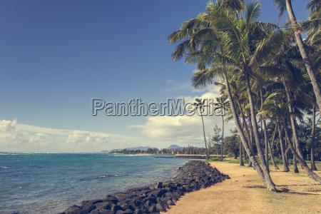 palmy kokosowe na piaszczystej plazy w