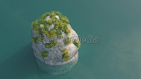 blooming plants growing on rock in
