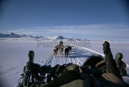 transport psow grenlandia regiony polarne