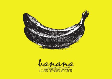 cyfrowy wektor szczegolowe wyciagnac reke banana