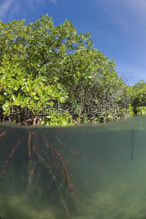 jazda podrozowanie kolor drzewo korzen fotografia