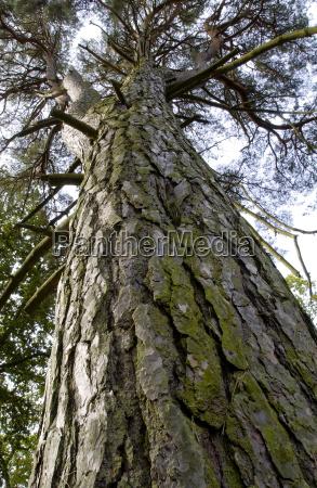 kolor drzewo drzewa wielkolud liscie flora