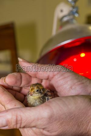 zwierze ptak usa maly cienki niski