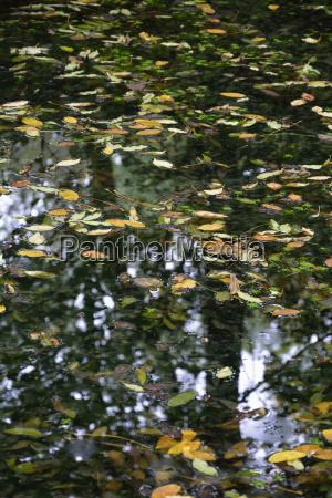 lisc liscie refleksja jesienny bayern bawaria