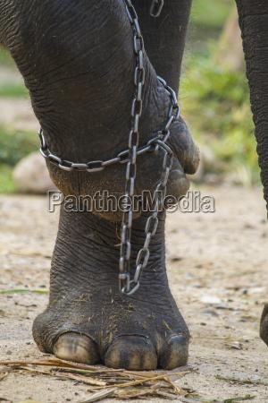 tajlandia chiang mai slon nogi w