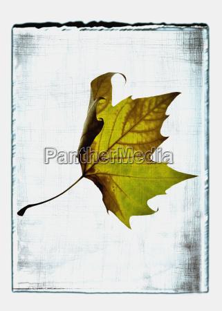 lisc fotografia fotografia obrazek ilustracja oswietlenie