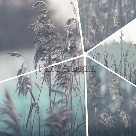 kolaz obrazow zimowych tlo podrozy moje