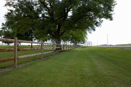 drzewo drzewa horyzont ameykanski usa na