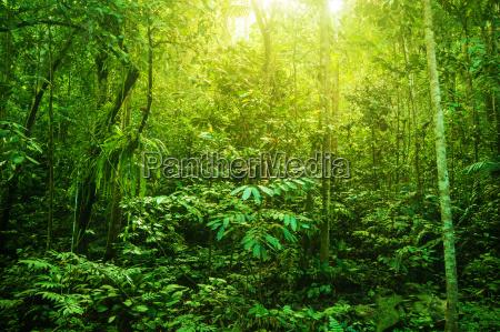 fantastyczny tropikalny gesty las