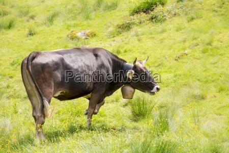 rolnictwo zwierze ssak gospodarstwo rolnictwo architektura