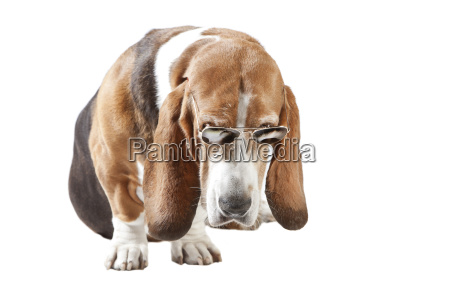zwolniony opcjonalne zwierze zwierze domowe portret