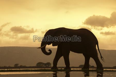 chodzenie zwiedzanie jazda podrozowanie kolor afryka