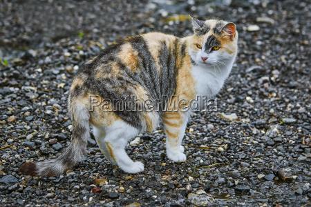 kot domowy na drodze