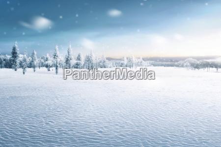 krajobraz sniezny pole z zamarznietymi drzewami