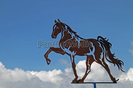 jechac konno jezdziectwo kawaleria kon zwierze