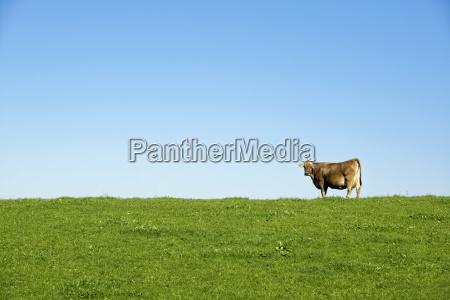 jazda podrozowanie zwierze ssak gospodarstwo rolnictwo