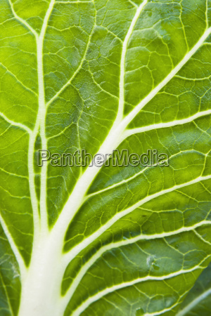 detail of organiclly grown swiss chard