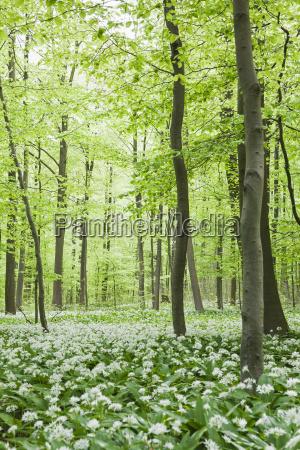 germany north rhine westaphalia eifel wild