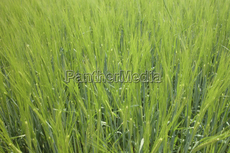 cor verde agricultura campo verao colorido