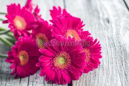 piekny mily kwiat kwiatek zawod roslina
