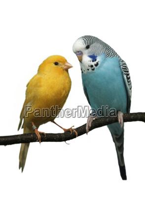 azul objeto liberado animal animal de