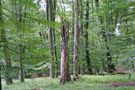 folha arvore arvores madeira caverna tronco