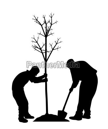 drzewo park ogrod ogrodek ogrodnictwo praca