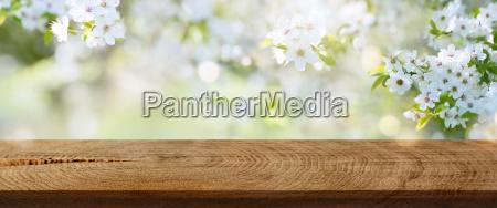 wiosenne kwiaty w parku z rustykalnym