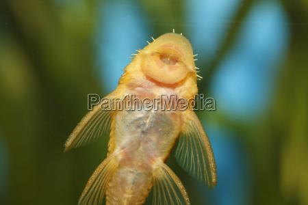 zwierze fauna zwierzeta zwierzatka meski akwarium