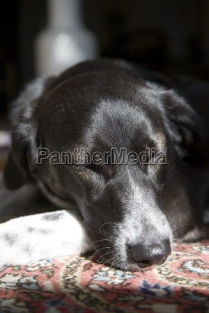 a black and white mongrel dog