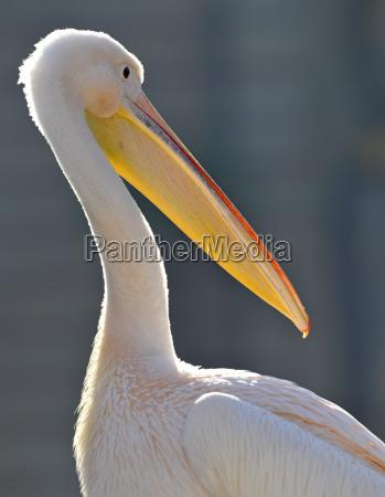 zwierze ptak fauna zwierzeta zwierzatka portret