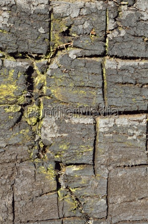 old peatstitch with stinging marks peat