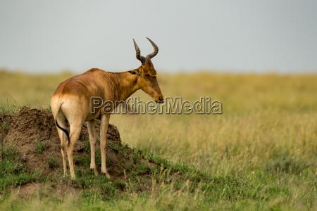 zwierze ssak afryka przyrody afryki po