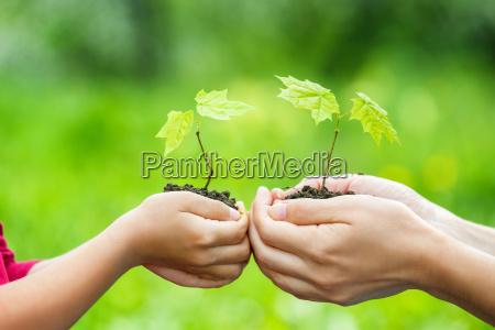 dorosly i dziecko trzymanie malej zielonej
