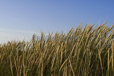 niebieski przyroda srodowisko plaza brzegach brzeg