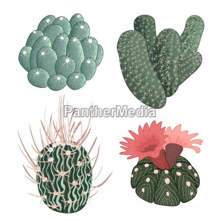 zbior kaktusow recznie rysowane ilustracji wektorowych