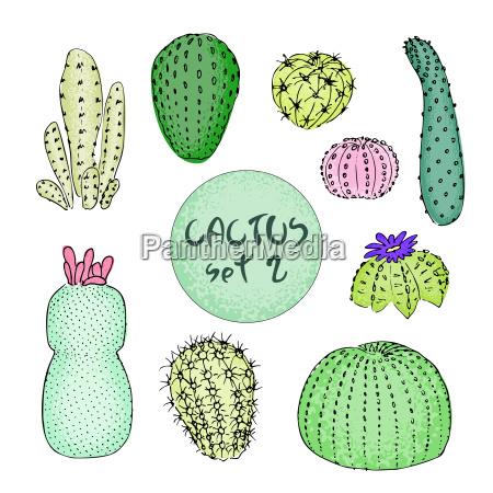 set barwioni kaktusy reka rysujaca wektorowa