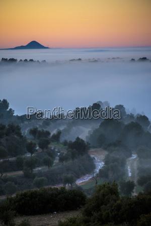 drzewo polna droga mgla hiszpania na