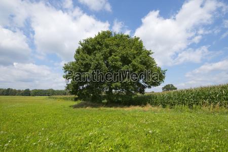 wolnostojace obszarow wiejskich obszar wiejski atrakcje
