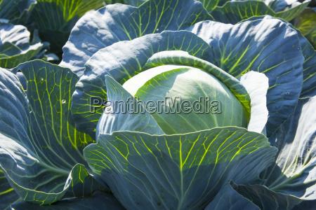 rolnictwo zblizenie sadzenie sadzic rosnac sadzenia