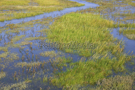 salt marshes with rising water sankt