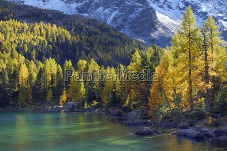 larchenwald at the lake lago di