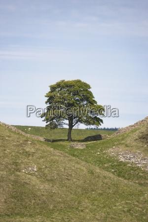 drzewo drzewa gora anhoehe wzgorze gory