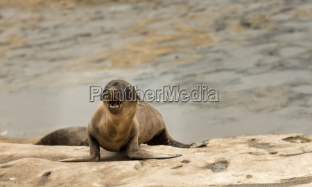 turystyka kalifornia przyrody california turystycznych morskich