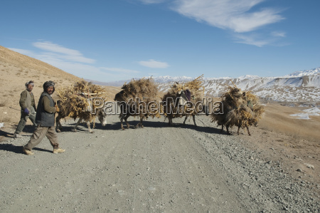 hazara rolnicy osly z ladunkiem